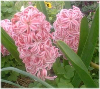 Foto: www.gardensablaze.com