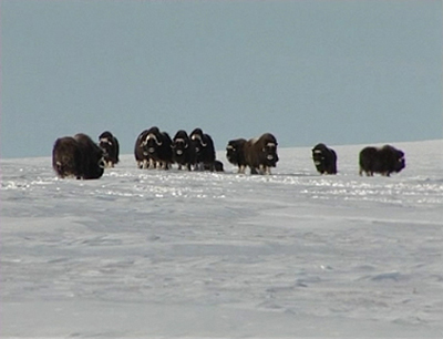 Foto: www.vesilind.ee