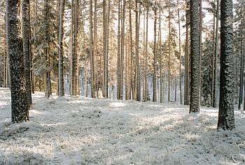 Foto: www.polvamaa.ee