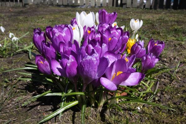 Kevad2