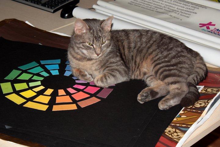 Fotol: kunstikooli kass nimega Igor Tõnu Tass, koolipere täieõiguslik liige. Foto autor Külli Laidla